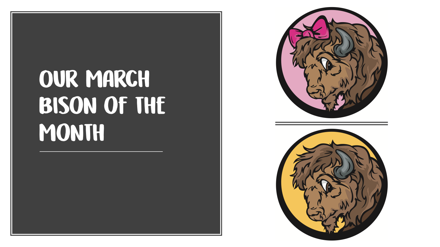 March Bison of the Month
