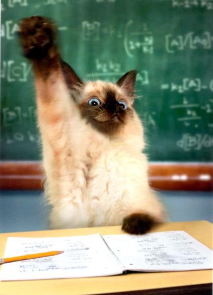 Math Kitty
