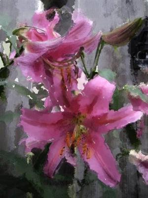 Pink Daylilly_Dadiego