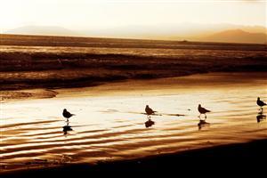 Birdies Walking Dadiego