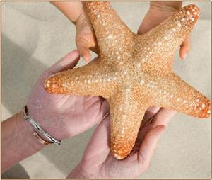 starfish parent liaison logo